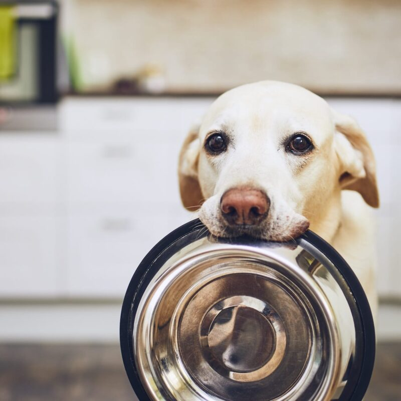 How To Spruce Up Your Dog's Digestive Health This Summer